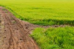 Зеленое поле риса с грязной улицей Стоковые Изображения