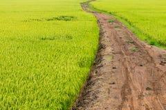 Зеленое поле риса с грязной улицей Стоковая Фотография