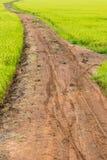 Зеленое поле риса с грязной улицей Стоковые Изображения RF