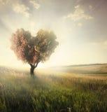 Зеленое поле с деревом формы сердца стоковые изображения rf
