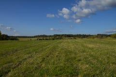 Зеленое поле с накошенной травой Стоковое Фото