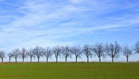 Зеленое поле с переулком дерева Стоковые Изображения