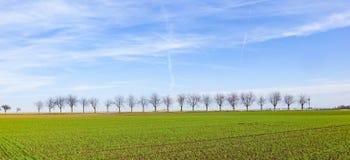 Зеленое поле с переулком дерева Стоковые Изображения RF