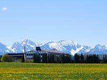 Зеленое поле с ясным голубым небом в Германии - Австрии Стоковые Фотографии RF