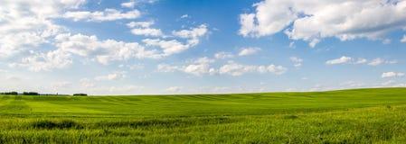 Зеленое поле Стоковое Фото