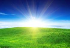Зеленое поле стоковое фото rf
