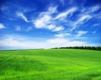 Зеленое поле стоковые фото