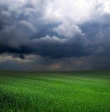 Зеленое поле стоковая фотография rf
