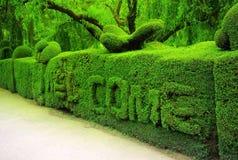 Зеленое приветственное сообщение Стоковая Фотография