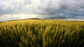 Зеленое пшеничное поле в движении с ветротурбинами на заднем плане видеоматериал