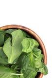 Зеленое разрешение шпината Стоковое фото RF