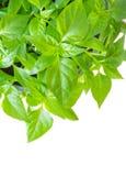 Зеленое растение, взгляд сверху Стоковые Изображения RF