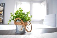 Зеленое растение в баке олова завязало веревочку на деревянном столе в солнечном свете Стоковая Фотография RF