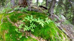 Зеленое растение в лесе сток-видео