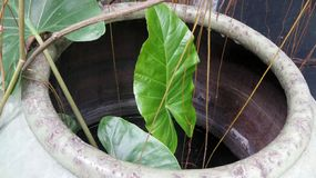 Зеленое растение в опарнике воды глины Стоковая Фотография RF