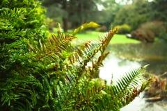 Зеленое растение в парке Стоковые Фото