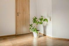 Зеленое растение в пустой комнате Стоковая Фотография