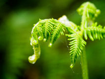 Зеленое растение в тропическом лесе стоковая фотография rf