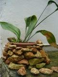 Зеленое растение в цветочном горшке стоковые фотографии rf