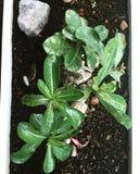 Зеленое растение крытое Стоковое Изображение RF