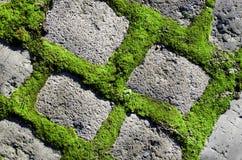 Зеленое растение между предпосылкой кирпичей цемента Путь сада каменный Стоковые Изображения RF