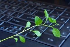 Зеленое растение на клавиатуре Стоковая Фотография RF