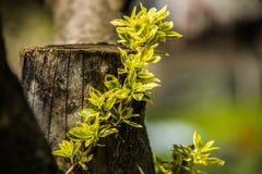 Зеленое растение на старом дереве Стоковые Фото