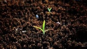 Зеленое растение растет вверх от почвы Стоковые Изображения