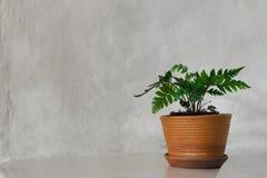 Зеленое растение с белой стеной земли стоковая фотография rf