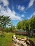Зеленое растение с видом на озеро Стоковое Изображение RF