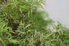 Зеленое растение с малыми листьями Стоковые Изображения