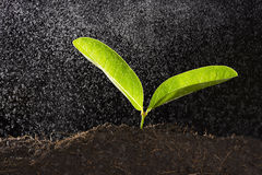 Зеленое растение с падением воды Стоковые Изображения RF