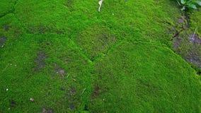Зеленое растение текстуры Стоковое Изображение RF