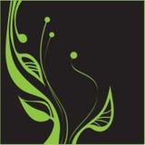 Зеленое растение Стоковое Изображение