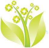 Зеленое растение Стоковые Изображения RF