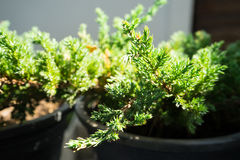 Зеленое растение Стоковая Фотография