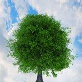 Зеленое растущее дерево Мультимедиа стоковые изображения rf