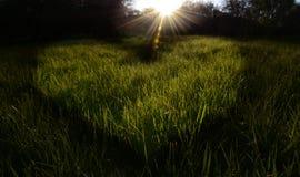 Зеленое свежее поле травы в форме сердца в солнечном свете Стоковое Фото
