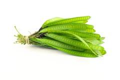 Зеленое семя белое Popinac, изолированные свинцовое дерево или одичалый тамаринд Стоковое фото RF