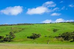 Зеленое сельскохозяйственне угодье Стоковое Фото