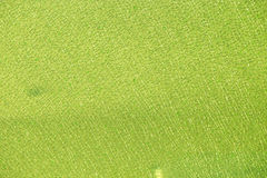 Зеленое стекло сломало Стоковое Изображение RF