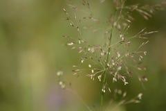 Зеленое счастливое Стоковая Фотография RF