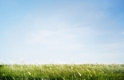 Зеленое травянистое поле парка Outdoors Стоковая Фотография RF
