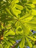 зеленое утро Стоковое Изображение