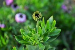 Зеленое цветение Стоковая Фотография RF
