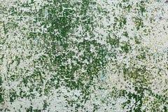 зеленое шелушение краски Стоковая Фотография RF