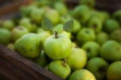 Зеленое яблоко с листьями на предпосылке яблок в коробке Стоковые Изображения RF