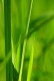 Зеленое backgound природы лист Стоковая Фотография RF