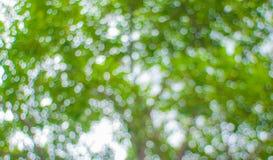 Зеленое bokeh Стоковые Изображения RF