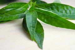 Зеленое Chirayta, король биттера листает на деревянной предпосылке Стоковое Фото